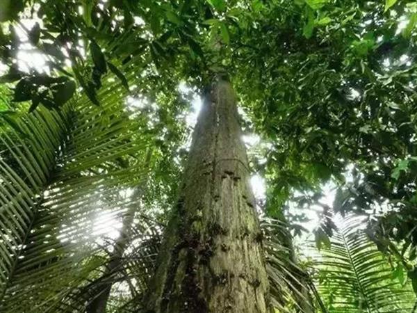 沉香与沉香木有哪些区别?